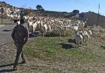 Curso ganadería entre todos